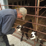 grass-fed natural beef jjjm organic farms - life on the farm 4