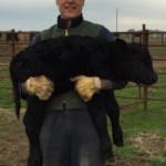 grass-fed natural beef jjjm organic farms - life on the farm 5