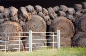 organic hay bales in barn jjjm organic farms in missouri-1